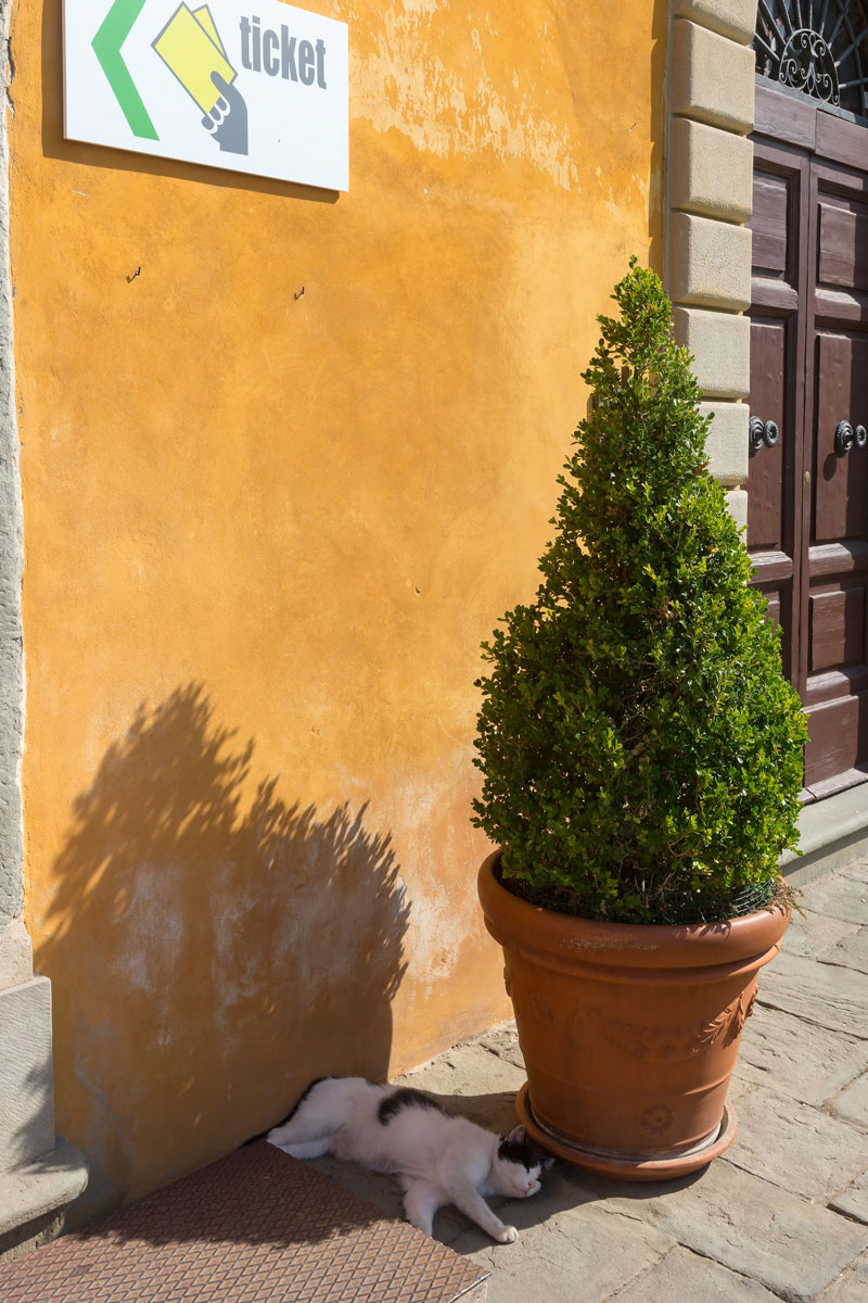 Pisa, Toscana - lusta macska a Piazza dei Miracoli-n